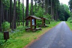 休息处在森林里 库存照片