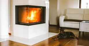 休息由壁炉的狗 库存照片