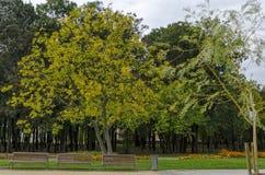 休息的普遍的北部公园与秋季老森林、长木凳和花园在Vrabnitsa区 库存照片