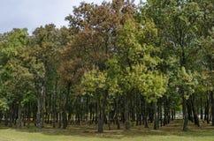 休息的普遍的北部公园与秋季老森林在Vrabnitsa区 免版税库存图片