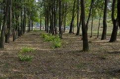 休息的普遍的北部公园与秋季老森林在Vrabnitsa区 库存图片