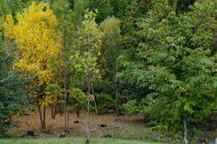 休息的普遍的北部公园与秋季老森林在Vrabnitsa区 库存照片