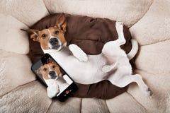 休息的狗睡觉或 免版税库存照片