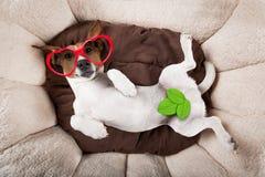 休息的狗睡觉或 免版税库存图片