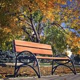 休息的长凳在秋天公园 库存图片