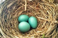 休息的鸡蛋 免版税库存照片