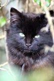 休息的黑小猫 图库摄影