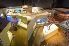 休斯敦,美国- 2017年1月12日:骨头化石顶视图在自然科学里面博物馆的在休斯敦博物馆 库存图片