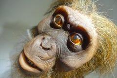 休斯敦,美国- 2017年1月12日:关闭一个猴子头在自然科学国家博物馆在奥兰多休斯敦  库存照片