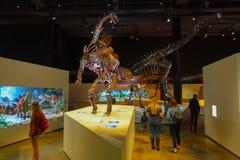 休斯敦,美国- 2017年1月12日:恐龙剑龙博览会化石在自然科学国家博物馆  免版税库存图片