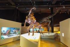 休斯敦,美国- 2017年1月12日:恐龙剑龙博览会化石在自然科学国家博物馆  库存图片