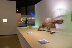 休斯敦,美国- 2017年1月12日:恐龙剑龙博览会化石在自然科学国家博物馆  免版税库存照片