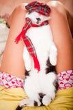 休眠在其责任人膝部的幼小猫 免版税库存照片