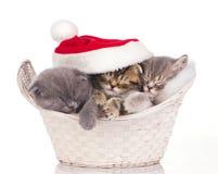 休眠在圣诞节的三只猫 免版税库存图片