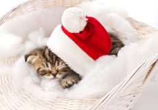 休眠在圣诞节的毛茸的小猫 免版税库存照片