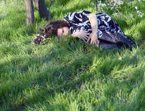 休眠在草女孩 免版税库存照片