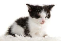 休眠小的小猫的特写镜头 免版税库存图片