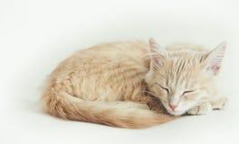 休眠小的红色小猫 库存图片