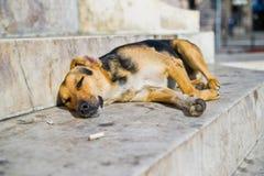 休眠无家可归的狗 免版税库存照片