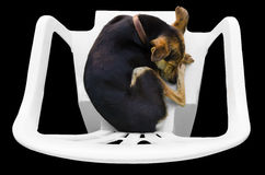 休眠狗 免版税库存图片