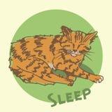 休眠猫 草图 图库摄影