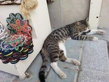 休眠猫 免版税图库摄影