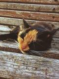 休眠猫 库存图片