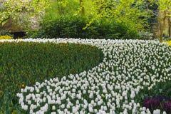 众多公共可访问在绽放的郁金香在荷兰春天Keukenhof庭院里 免版税图库摄影