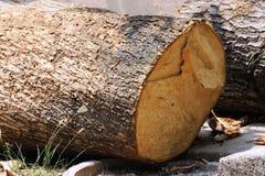优美的木头 免版税库存照片