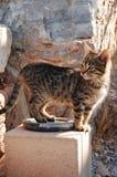 优美的猫 免版税库存照片