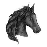 黑优美的马画象 免版税库存照片