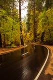 优胜美地国家公园在Californa 库存照片