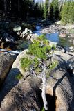 优胜美地国家公园Tuolomne河 免版税库存照片