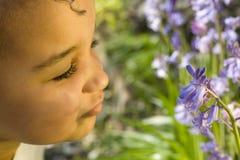 会开蓝色钟形花的草嗅到 免版税库存图片