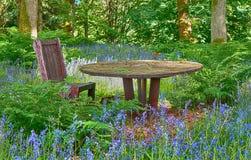 会开蓝色钟形花的草在森林地 库存图片