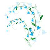 会开蓝色钟形花的草小树枝  库存图片