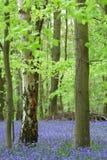 会开蓝色钟形花的草木头 图库摄影