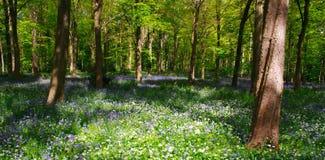 会开蓝色钟形花的草树型视图木头 图库摄影