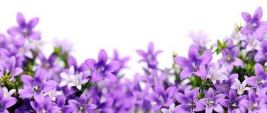 会开蓝色钟形花的草框架  图库摄影
