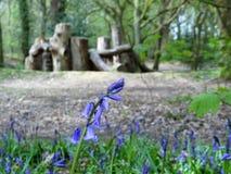 会开蓝色钟形花的草特写镜头有被弄脏的自然玩耍区域背景,Chorleywood共同性 免版税库存图片