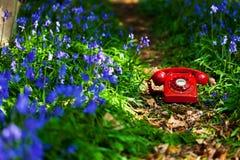 会开蓝色钟形花的草电话 库存图片