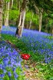 会开蓝色钟形花的草电话 图库摄影