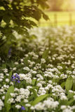 会开蓝色钟形花的草的惊人的概念性新春天风景图象和 库存照片