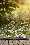会开蓝色钟形花的草的惊人的概念性新春天风景图象和 库存图片