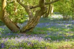 会开蓝色钟形花的草结构树 免版税库存照片