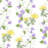 会开蓝色钟形花的草花玫瑰 库存照片
