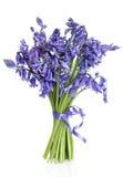 会开蓝色钟形花的草花诗句 免版税库存照片