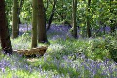 会开蓝色钟形花的草路径木头 免版税图库摄影