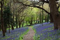 会开蓝色钟形花的草路径木头 免版税库存图片