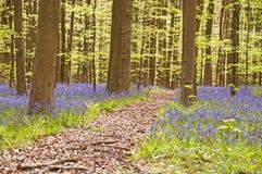 会开蓝色钟形花的草路径 库存图片